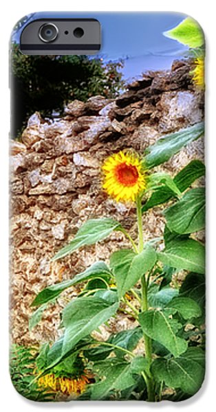 Sunflower Wall iPhone Case by Bill Cannon