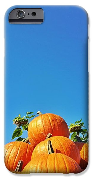 Concord Ma. iPhone Cases - Sunflowers and Pumpkins at Walden Woods iPhone Case by Sally Cooper