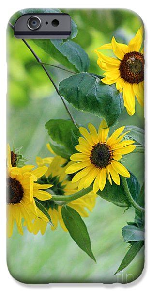 Crops iPhone Cases - Sunflowers and Redbud iPhone Case by Karen Adams