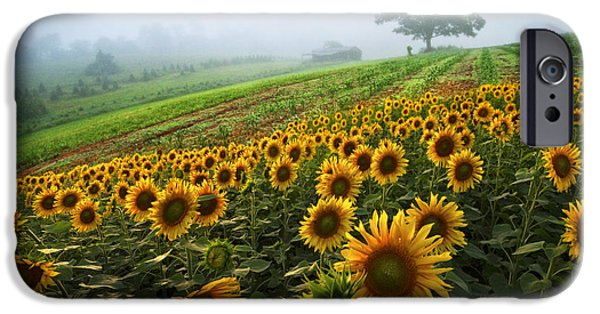 Crops iPhone Cases - Sunflowers at the Farm iPhone Case by Debra and Dave Vanderlaan