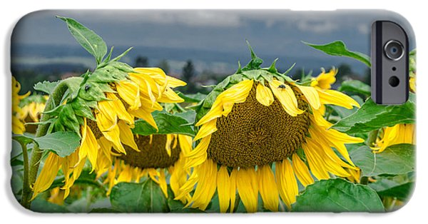 Michelle iPhone Cases - Sunflowers On A Rainy Day iPhone Case by Michelle Meenawong