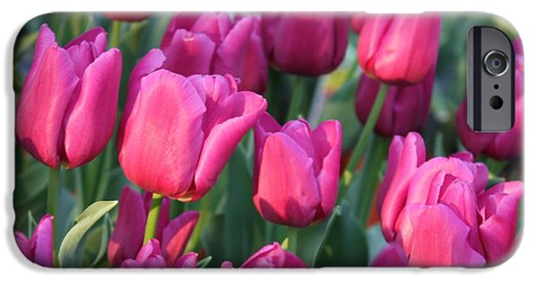 Sunlight On Flowers iPhone Cases - Sunlight on Pink Tulips iPhone Case by Carol Groenen