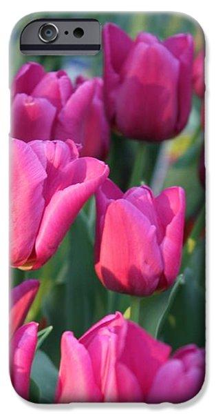 Sunlight on Pink Tulips iPhone Case by Carol Groenen
