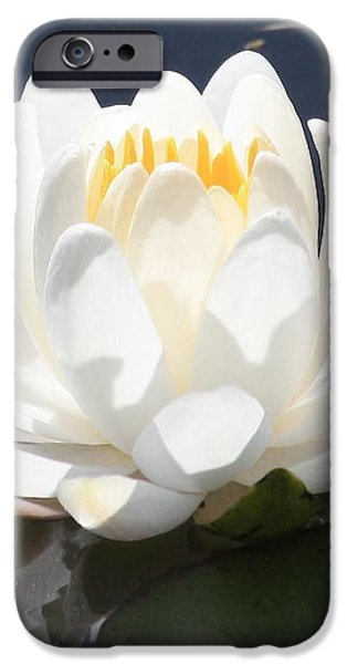 Sunlight on Water Lily iPhone Case by Carol Groenen