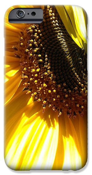 Plant iPhone Cases - Sunlight Shadows iPhone Case by LKB Art and Photography