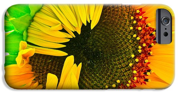 Sunflower Photograph iPhone Cases - Sunny iPhone Case by Gwyn Newcombe