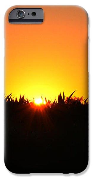 Sunrise Over Corn Field iPhone Case by Bill Cannon