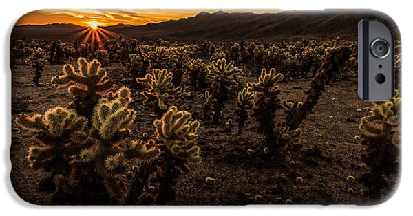 Sun Rays Pyrography iPhone Cases - Sunrise over the Cactus Garden iPhone Case by Rick Strobaugh