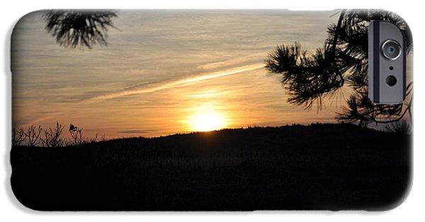 Pines iPhone Cases - Sunrise thru pine trees iPhone Case by Jo-Ann  Matthews