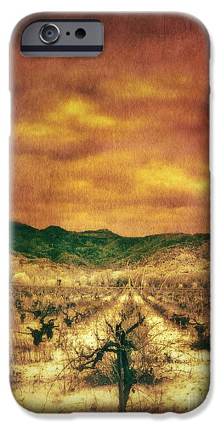 Vineyard In Napa iPhone Cases - Sunset Over Vineyard iPhone Case by Jill Battaglia