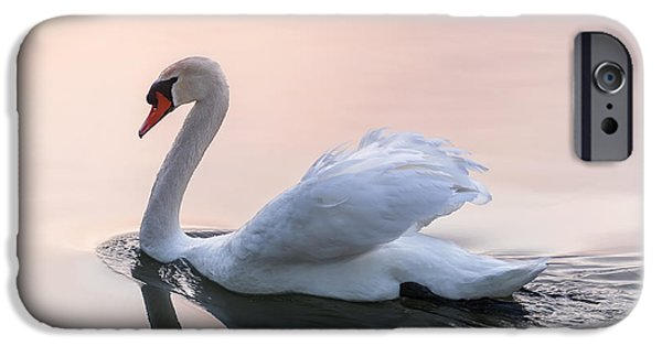 Swan iPhone Cases - Sunset swan iPhone Case by Elena Elisseeva