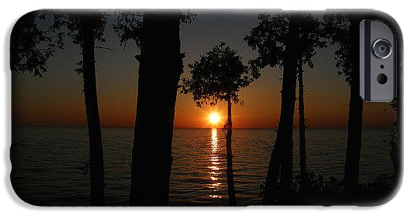 Pines iPhone Cases - Sunset Through the Pines iPhone Case by Terry Cobb
