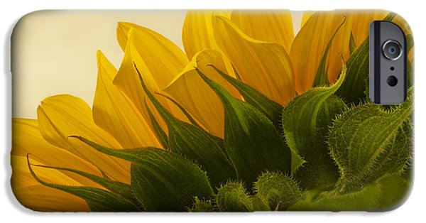 Autumn iPhone Cases - Sunshine Under The Petals iPhone Case by Sandra Foster