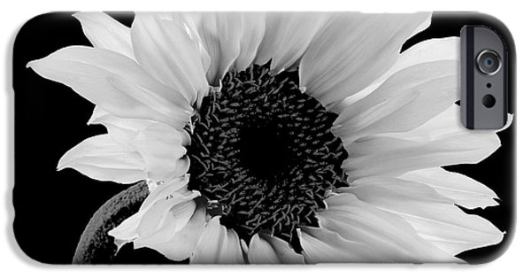 Sunflower Photograph iPhone Cases - Sunwashed iPhone Case by Mindy Sommers