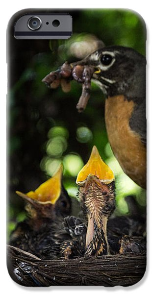 Feeds Chicks iPhone Cases - Supper Time iPhone Case by Chris Bordeleau