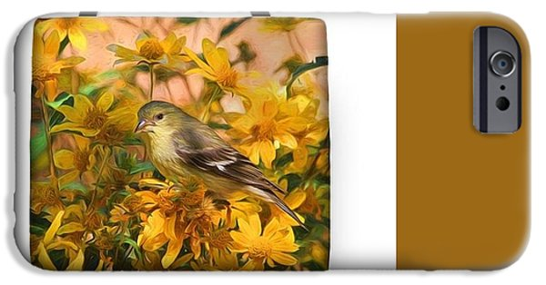 Finch iPhone Cases - Surrounded by Gold 2 iPhone Case by Donna Kennedy