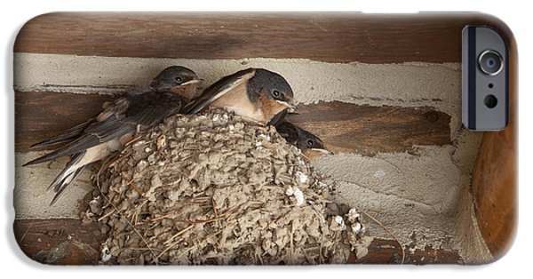 Barn Swallow iPhone Cases - Swallows at Jenny Lake Lodge iPhone Case by Stephen Schwiesow