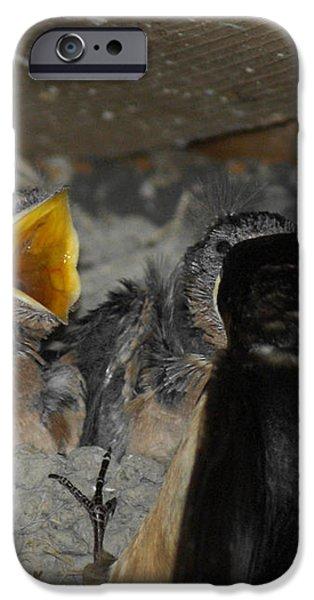 Swallows Opera  iPhone Case by Ernie Echols