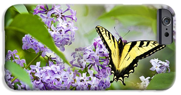 Floral Photographs iPhone Cases - Swallowtail Butterfly on Lilacs iPhone Case by Christina Rollo