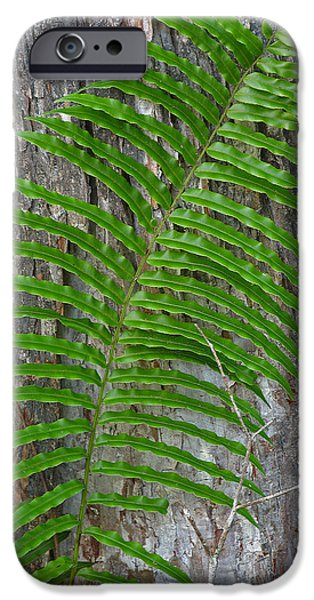 Palm Tree Greeting Cards iPhone Cases - Swamp Fern iPhone Case by Juergen Roth