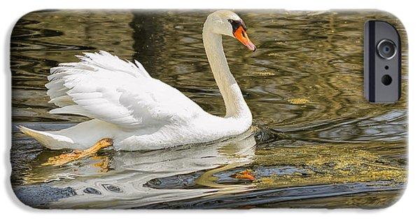 Fauna iPhone Cases - Swan a Swimmin iPhone Case by LeeAnn McLaneGoetz McLaneGoetzStudioLLCcom