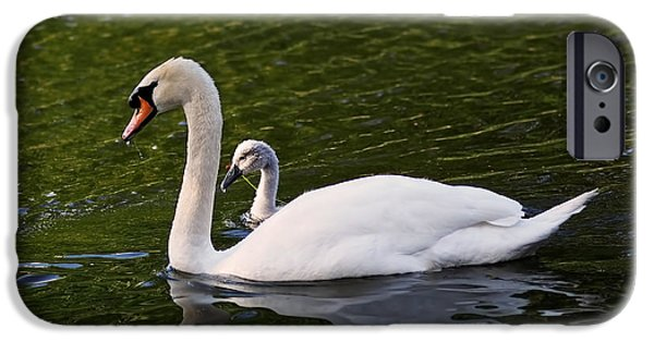 Swan iPhone Cases - Swan Mother with Cygnet iPhone Case by Rona Black