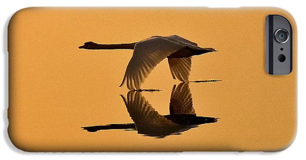 Swans... iPhone Cases - Swan Sunrise iPhone Case by Marcus Robertson