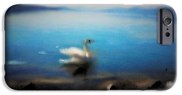 Swiss Mixed Media iPhone Cases - Swan Tranquility iPhone Case by Alex Thomas