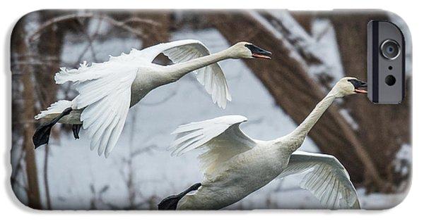 Innocence iPhone Cases - Swans Landing iPhone Case by Paul Freidlund