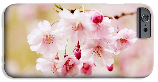 Cherry Blossoms Digital iPhone Cases - Sweet Cherry iPhone Case by Jessica Jenney