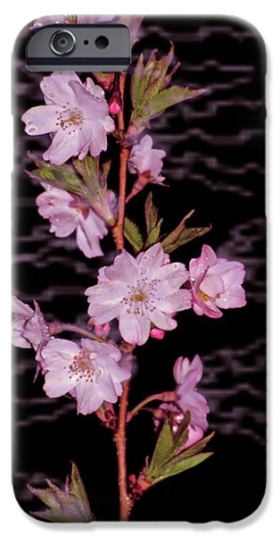 SWEET SMELL OF SPRING iPhone Case by Debra     Vatalaro