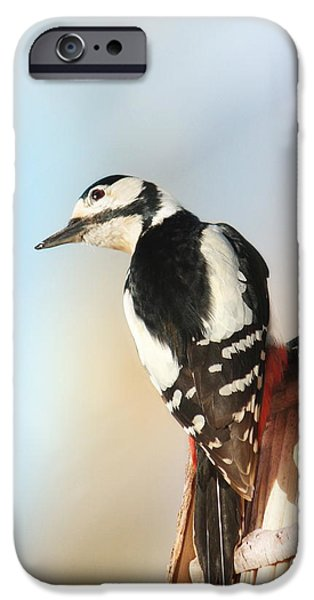 Animal Picture iPhone Cases - Sweet Woodpecker iPhone Case by Heike Hultsch