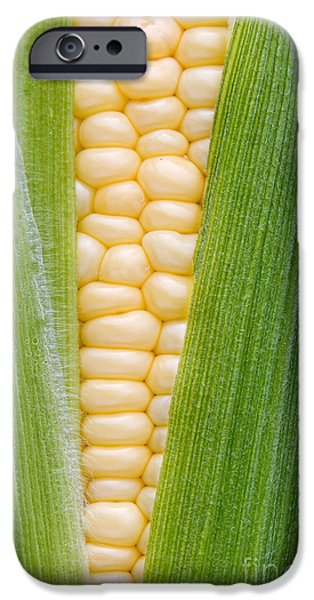 Crops iPhone Cases - Sweetcorn iPhone Case by Tim Gainey
