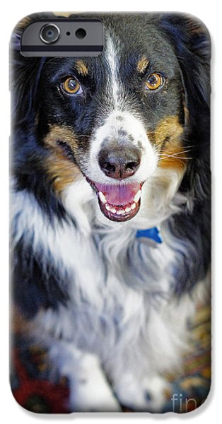 Puppies iPhone Cases - Sweetest Aussie Girl iPhone Case by ArtissiMo Photography