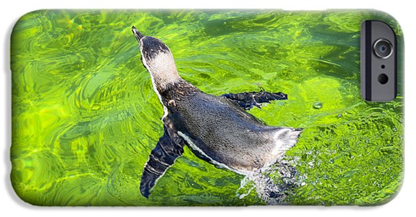 Apnea iPhone Cases - Swimming Penguin In A Clear Green Water iPhone Case by Jonas Leonas
