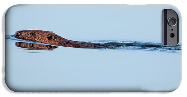 Beaver iPhone Cases - Swimming With the Beaver iPhone Case by Bill Wakeley