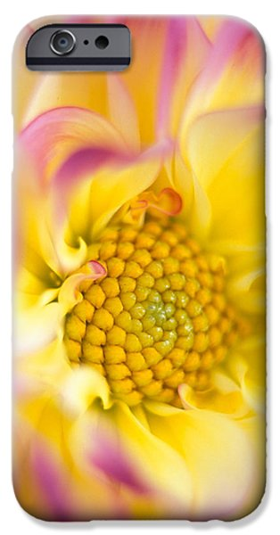 Swirly Dahlia iPhone Case by Kathy Yates