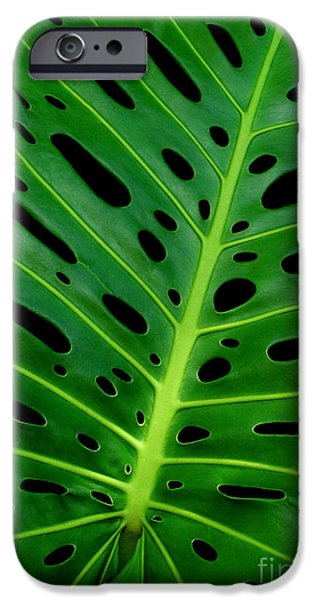 Philodendron iPhone Cases - Swiss Cheese Plant iPhone Case by James Temple