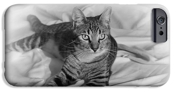 Gray Hair iPhone Cases - Tabby Cat iPhone Case by Francie Davis