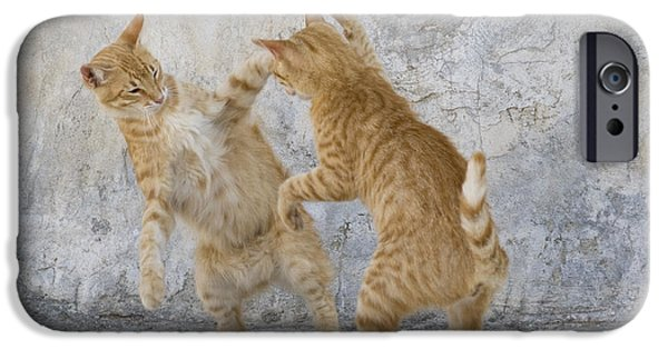 Litter Mates iPhone Cases - Tabby Cats Fighting iPhone Case by Jean-Louis Klein & Marie-Luce Hubert