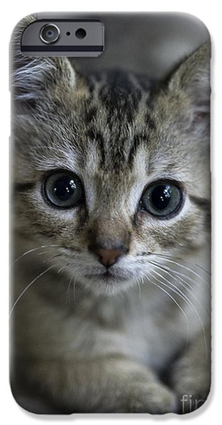 One iPhone Cases - Tabby Kitten iPhone Case by John Greim