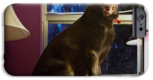 Chocolate Lab iPhone Cases - Table Ornament iPhone Case by Roger Wedegis