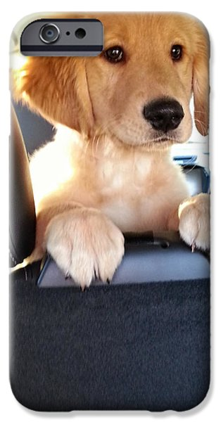 Puppies iPhone Cases - Take Me Home iPhone Case by Mark Harrington