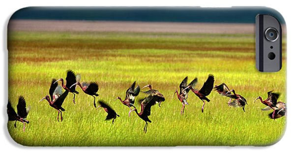 Ibis iPhone Cases - Take Off iPhone Case by Leland D Howard