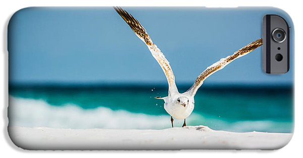 Sea Birds iPhone Cases - Take Off iPhone Case by Shelby  Young