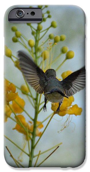 Yellow Bird Of Paradise iPhone Cases - Taking Flight  iPhone Case by Saija  Lehtonen
