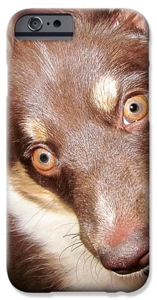 Talking iPhone Cases - Talking Dog iPhone Case by Gwyn Newcombe