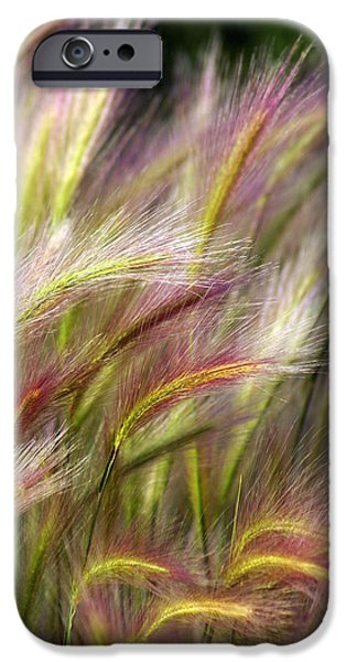 Plant iPhone Cases - Tall Grass iPhone Case by Marty Koch
