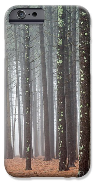 Fog Mist iPhone Cases - Tall Trees in the Mist iPhone Case by Anahi DeCanio - ArtyZen Studios