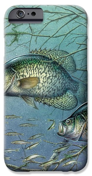 Tangled Cover Crappie II iPhone Case by Jon Q Wright